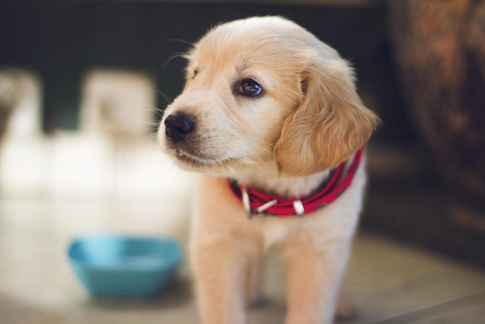 pet health insurance San Antonio TX
